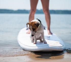 Самый большой заплыв на SUP-серфах с собаками